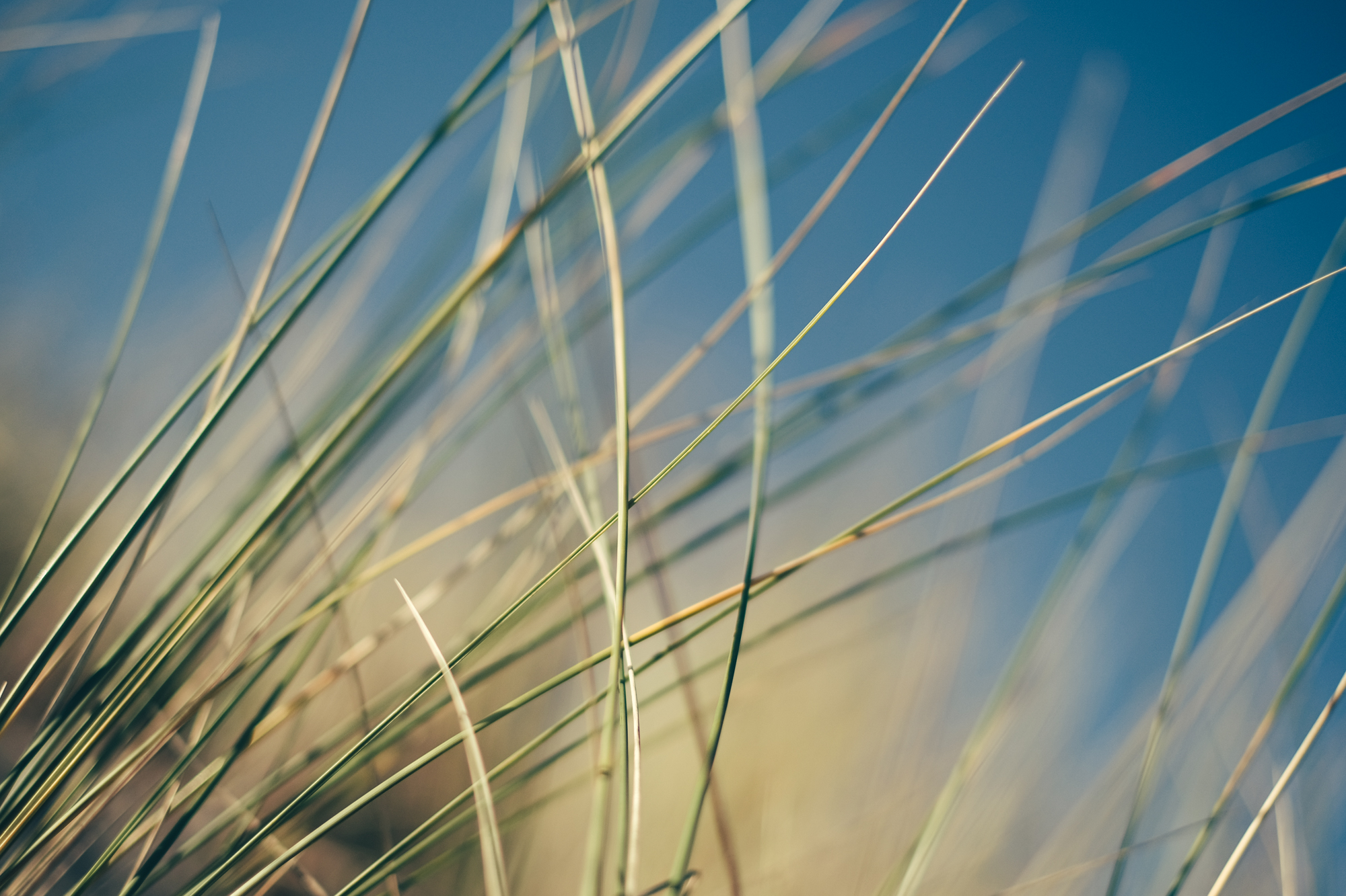 Wind blowing through grass Panel 3